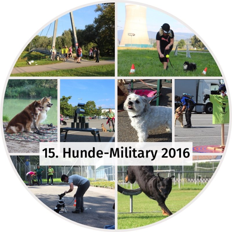 fotoalbum 15 hunde military 2016.jpg